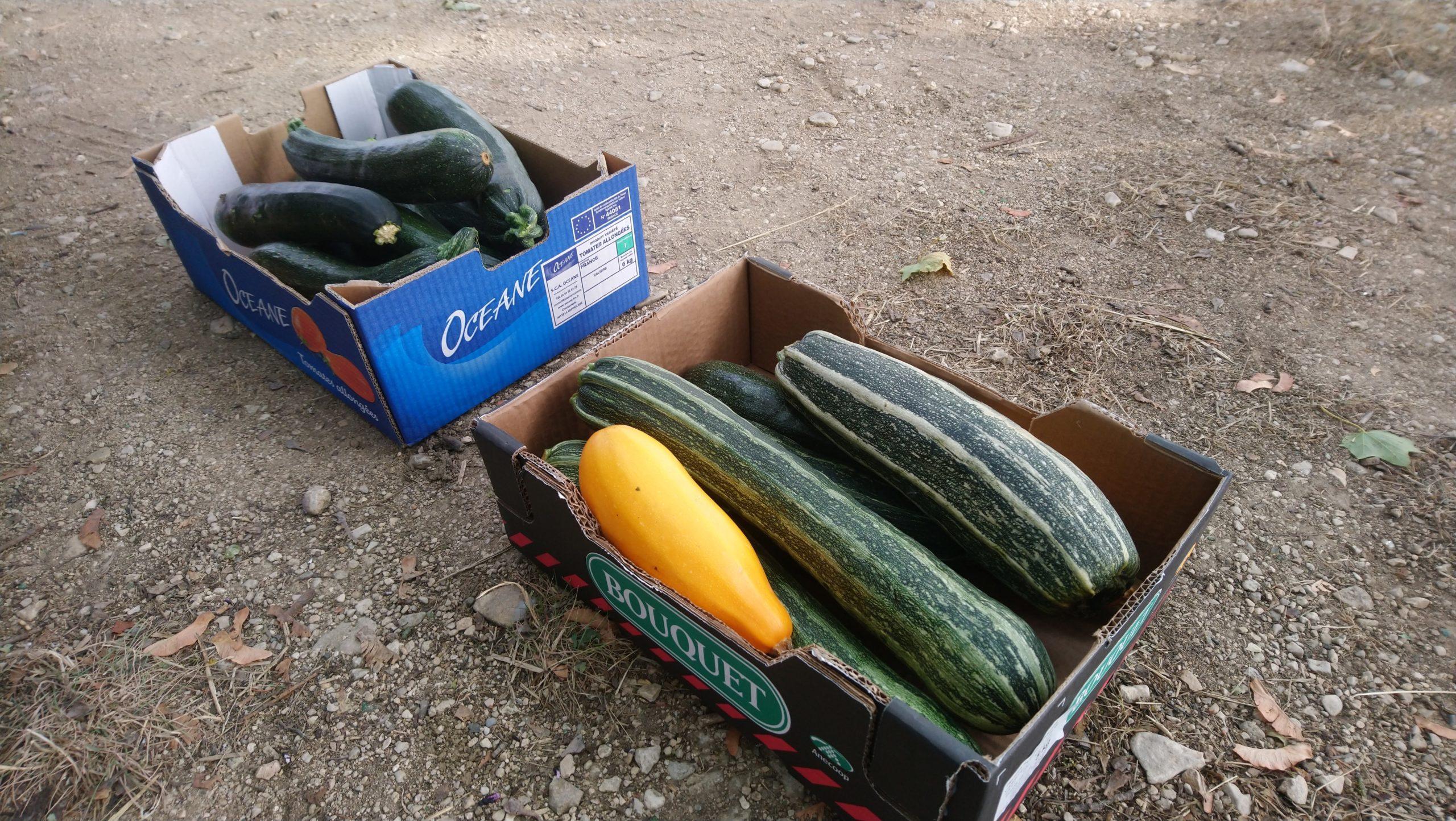 Premier lot de Légumes remis aux Restos du Cœur de Dijon en 2020